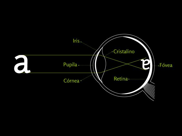 Sistema visual y partes del ojo