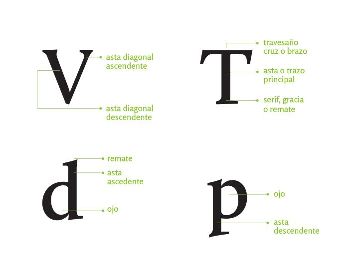 Typographic Anatomy Oert