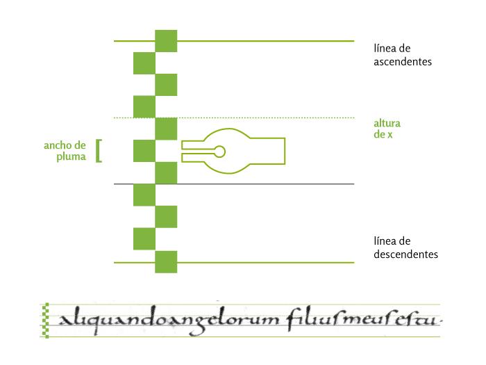 Relación entre la altura del signo y el ancho de pluma.